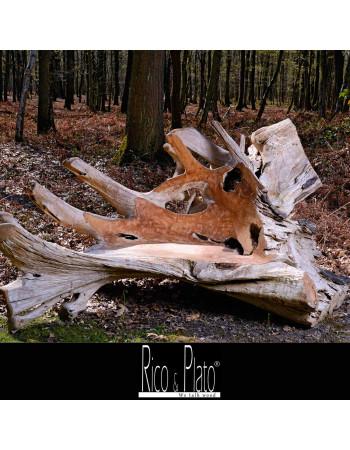 teak root benches | Rico & Plato